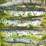 Recette anchois en persillade