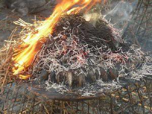 Moules cuites sous le foin