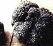 Truffe noire du Comtat de Provence