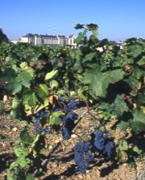 Vin du Pays Touharsais