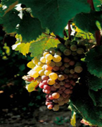 Vin des Côteaux du Giennois