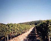 Vin de Saint-Nicolas de Bourgueil