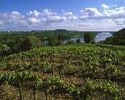 Vin des Côteaux Ancenis