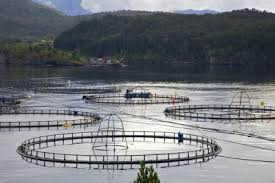 fermes d elevage du saumon au Chili