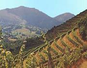 Vin du Pays basque