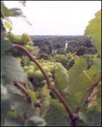 Vin des Fiefs vendéens