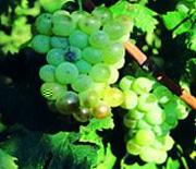 Vin des Côtes de provence en AOC
