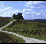 Vin des Côtes du Brûlhois