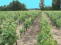 Vin Orléanais