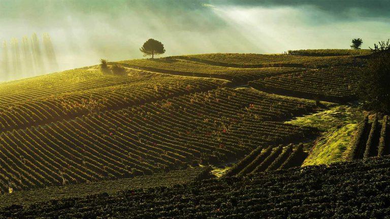 Vins de la région de Bordeaux