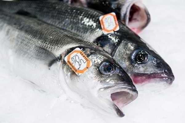 Calories dans le bar (poisson)