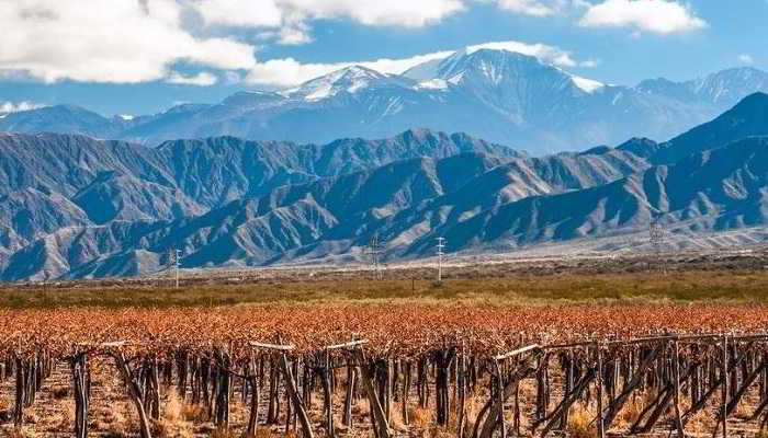 Production de vins en Argentine