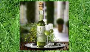 Recette Finochietto (liqueur au fenouil sauvage)