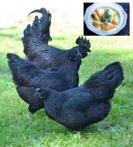 Recette Poularde noire en demi-deuil